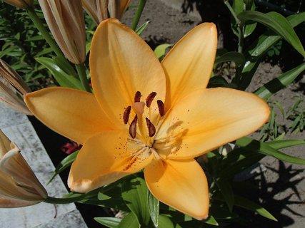 FOTKA - aj oranžová je pekná
