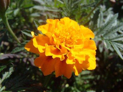FOTKA - krásny oranžový