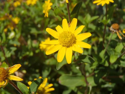 FOTKA - malé žlté slniečko