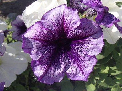 FOTKA - fialkovej farby