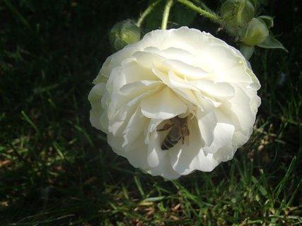 FOTKA - návšteva v bielej ružičke