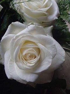 FOTKA - biela kráska v kytici