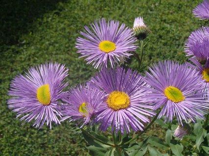 FOTKA - kvety turanu