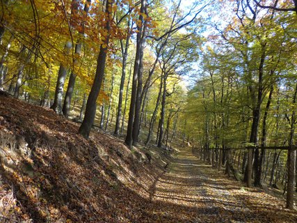 FOTKA - les- Jižní Morava