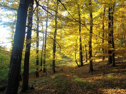 FOTKA - Les 2- Jižní Morava
