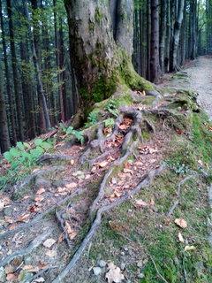 FOTKA - Kořenový labyrint
