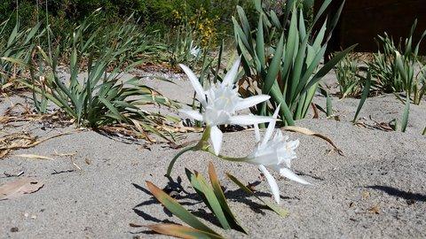 FOTKA - Orchidea na plazi Calanca