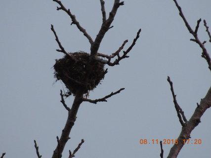 FOTKA - Opuštěné hnízdo na vršku meruňky