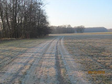 FOTKA - Cesta bez sněhu