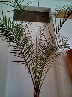FOTKA - Las palmas maxi