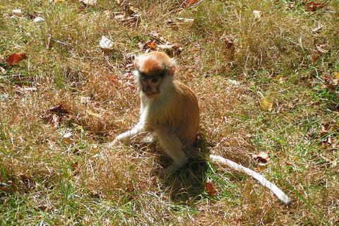 FOTKA - Opička v ZOO na Svatém Kopečku u Olomouce