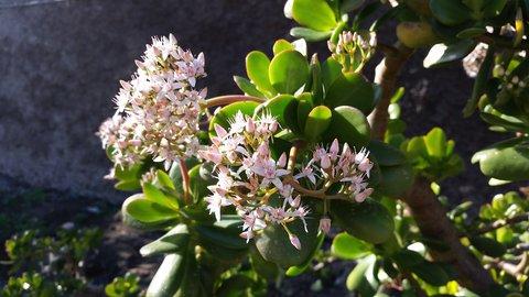 FOTKA - Bohate kvetoucí strom zivota