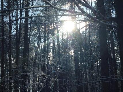 FOTKA - Sluníčko kouká mezi stromy.