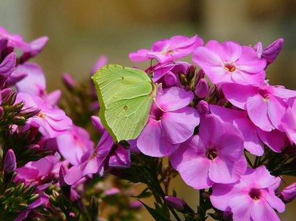 FOTKA - Motyl