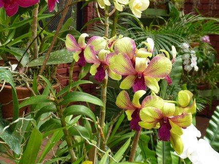 FOTKA - Žíhaný květ