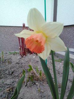 FOTKA - bílo oranžový