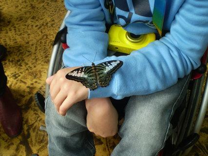 FOTKA - Motýl na dětském rukávu