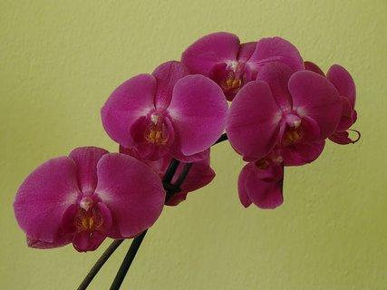 FOTKA - znova kvitne