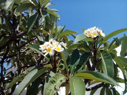 FOTKA - Pěkně kvete..