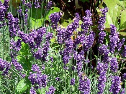 FOTKA - fialová nádhera