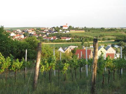 FOTKA - vinohrad v Bořeticích
