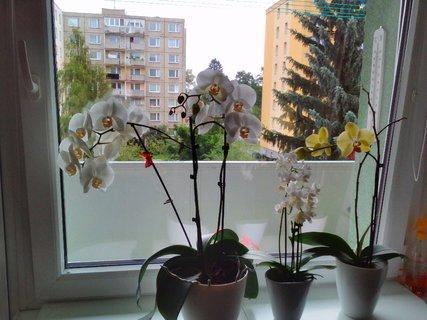 FOTKA - Pokoukání na okně
