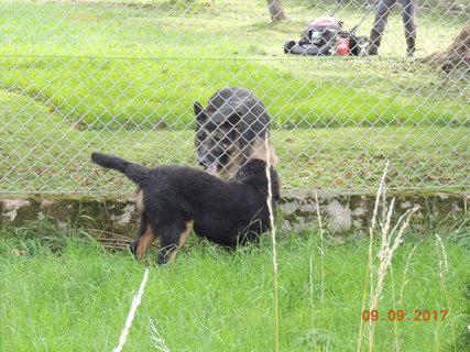 FOTKA - Čaky doráží na sousedovic psa