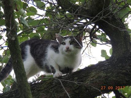 FOTKA - Ten černej zase vyvádí, ještě že jsem na stromě