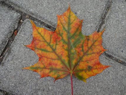 FOTKA - Malíř podzim
