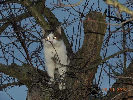 FOTKA - Čičák na stromě 19.11.