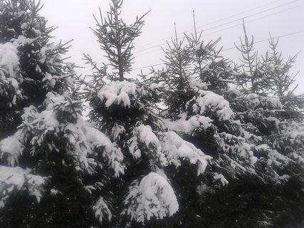 FOTKA - pod tíhou sněhu