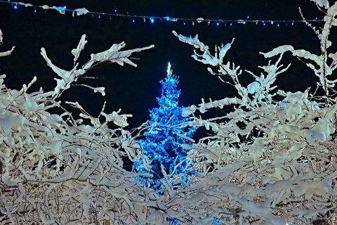 FOTKA - Zimní království