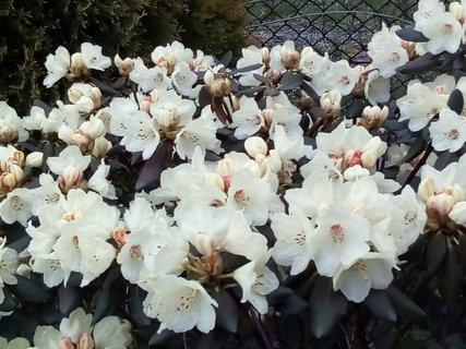 FOTKA - To je květů..