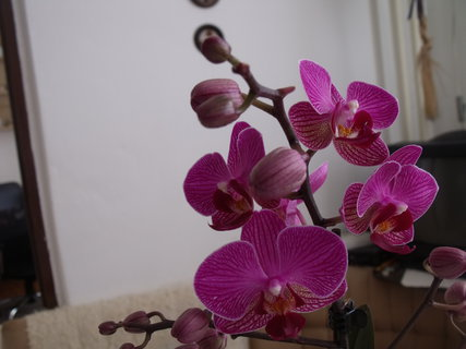 FOTKA - Květ orchidee