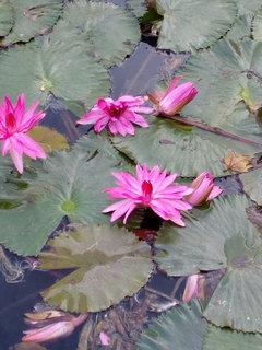 FOTKA - Ještě kvetou