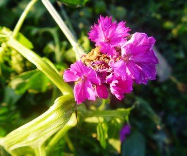 FOTKA - 1.12.kvetlo