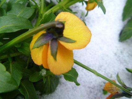 FOTKA - trošku prosincového sněhu