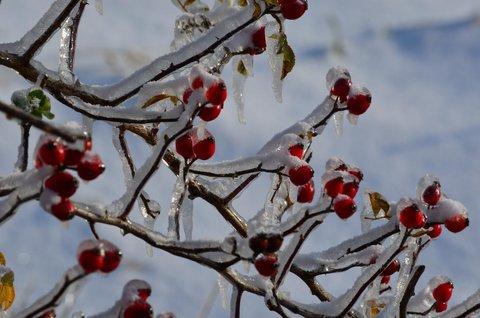 FOTKA - barevná zima