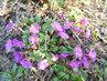 Květy postupně rozkvétají   (3.4.)
