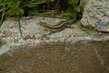 Ještěrka se vyhřívá na kameni