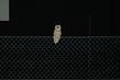 Sova v noci na plotě