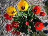 barevnost jara