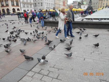 FOTKA - Je zde plno holubů