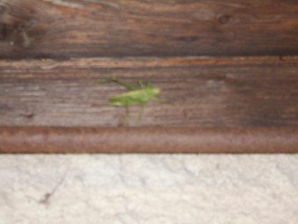 FOTKA - Koník se přemístil do stinu pod střechu