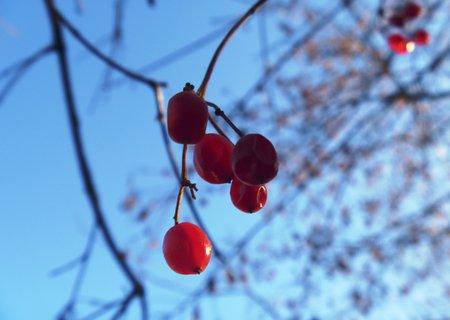 FOTKA - červené kuličky a obloha