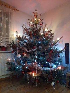 FOTKA - Připravený stromeček