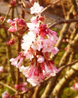 FOTKA - krásné květy