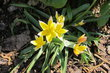 Záhonky s květy