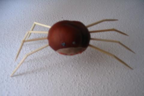 FOTKA - kaštánky - pavouček