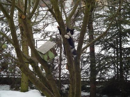 FOTKA - Sašenka na stromě